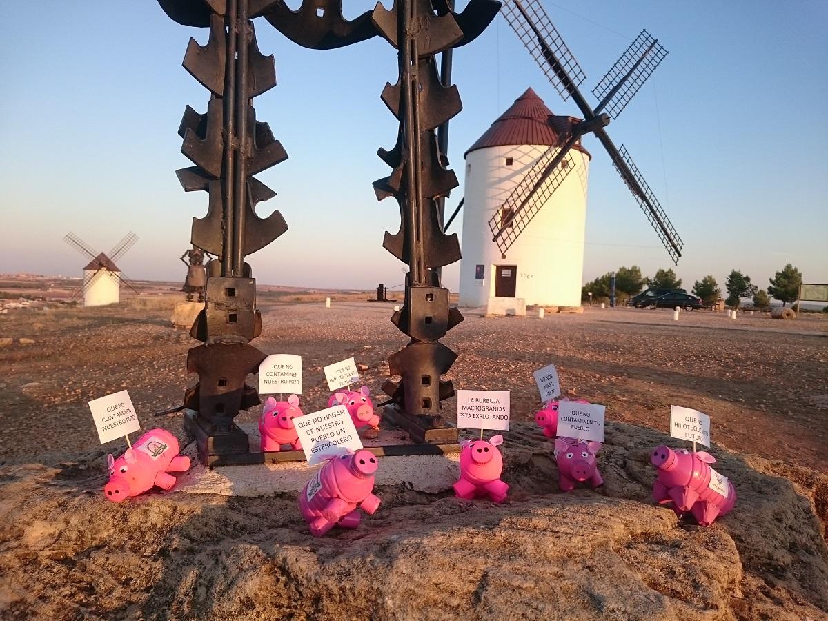 El Ayuntamiento de Mota del Cuervo deniega la licencia para una macrogranja porcina